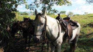 Cheval dans la vallée de Risaralda