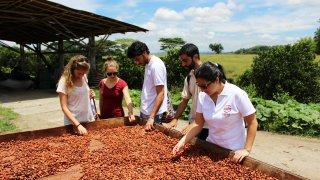 Exploitation de cacao