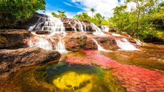 Caños Cristales, la rivière aux 7 couleurs