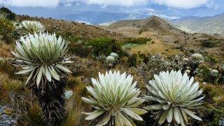 Séjour en altitude en Colombie
