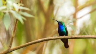 Les oiseaux endémiques