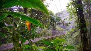 La végétation du Costa Rica dans le Parc National du volcan Arenal