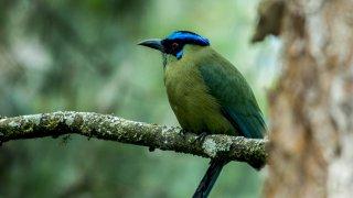 un oiseau de Colombie