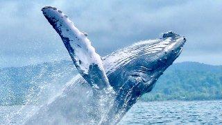 Observations des baleines sur la côte Pacifique