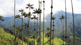 Vallée de Cocora dans la région du café en Colombie