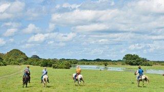 Les plaines des Llanos