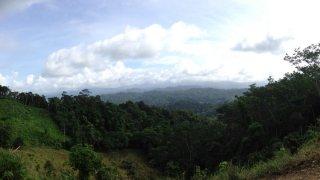 Bosque de los gigantes dans le Darien