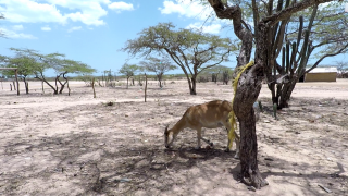 Camarones aux portes du désert de la Guajira