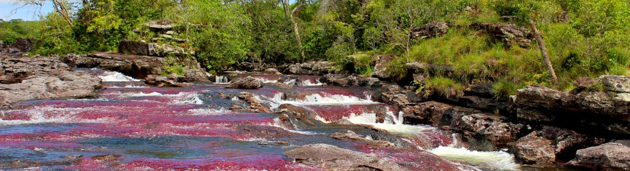 Caño Cristales la rivière aux 7 couleurs en Colombie