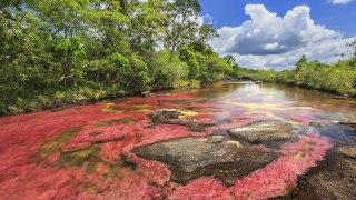 Les couleurs de la rivière Caños Cristales