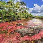 Caño Cristales, la rivière au 7 couleurs