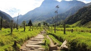 Les palmiers de la Vallée de Cocora