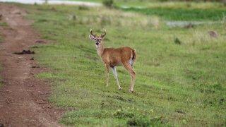 La faune de Llanos en Colombie