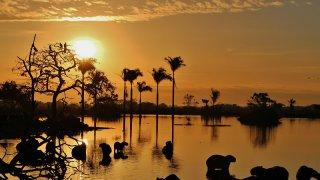 Un coucher de soleil sur les plaines de Llanos en Colombie