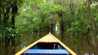 Dans l'Amazonie colombienne