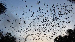 Nuée d'oiseaux dans l'Amazonie