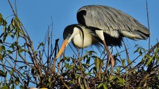 Les oiseaux des Llanos dans le Casanare