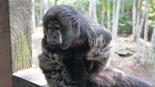 La faune amazonienne colombienne