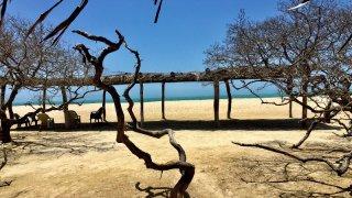 Dans la péninsule de la Guajira en Colombie