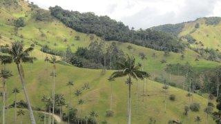 Dans la région de Salamina en Colombie