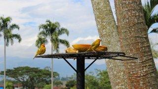 Les oiseaux de Colombie