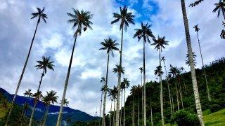 Les palmiers de la Vallée de Cocora en Colombie