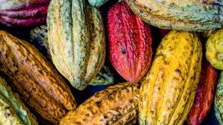 Fèves de cacao au Pérou