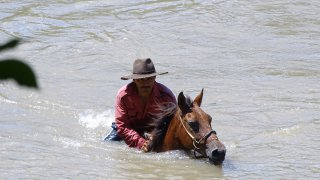 Remontée cheval du fleuve dans les Llanos