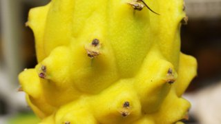 Pitaya, fruit de Colombie