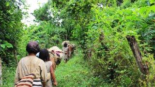 Le trek de la Ciudad Perdida près de Santa Marta en Colombie