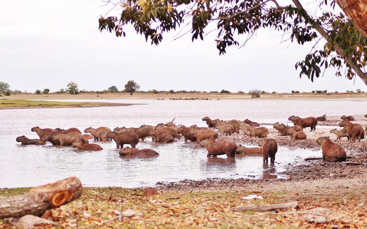 La vie sauvage dans les Llanos