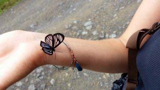 Le greta oto papillon aux ailes transparentes