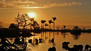 La Colombie dans l'objectif : des plaines des Llanos au désert de la Guajira