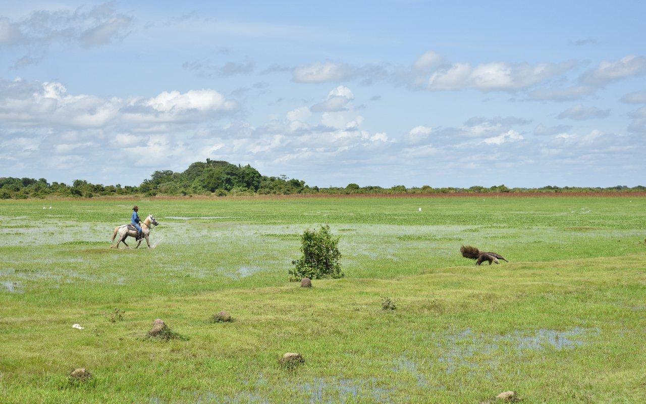 Paysages des Llanos en Colombie