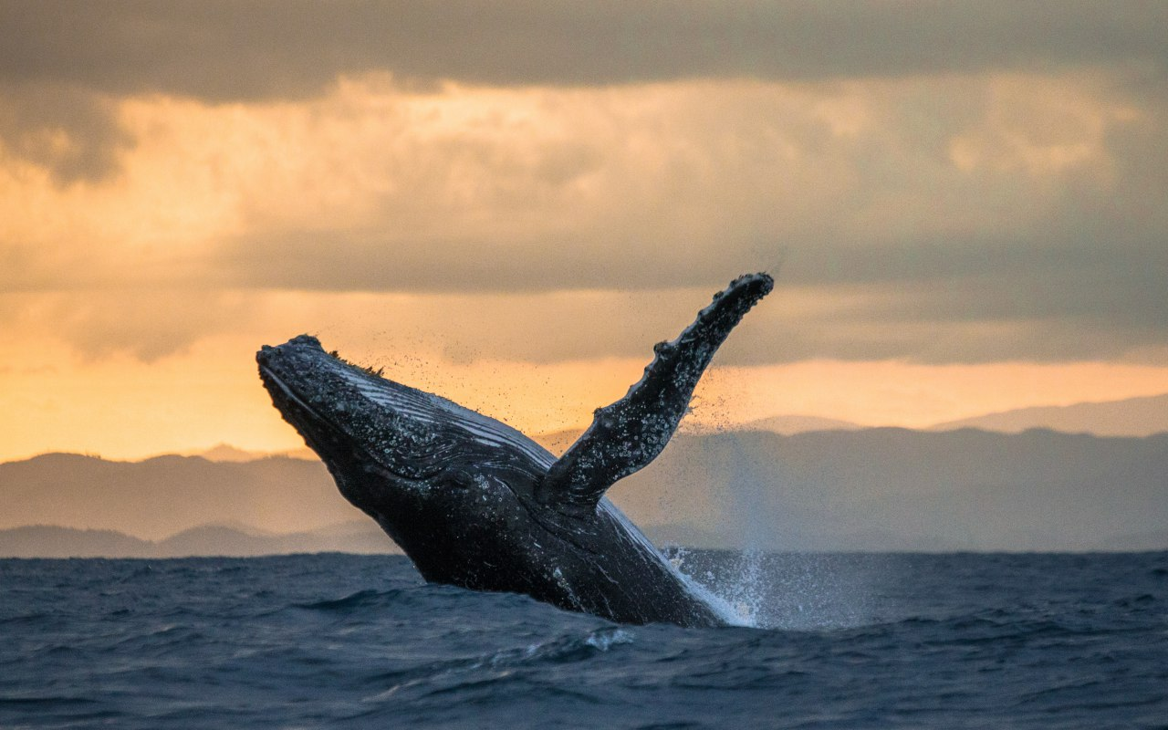 Observation des baleines