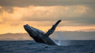 Observation des baleines dans le Pacifique