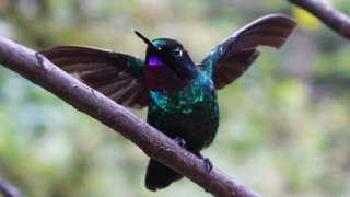 Faire un voyage birdwatching en Colombie