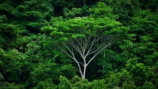 La fôret tropicale dense du Darien en Colombie