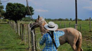 Ballade à cheval dans les Llanos Orientales