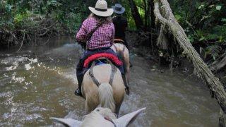 A cheval dans un marais du Casanare