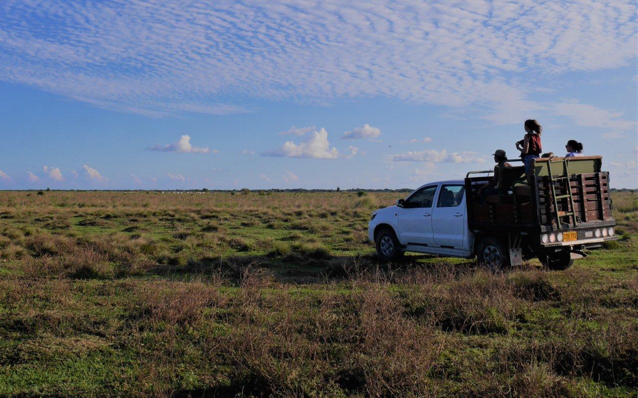 Safari dans les Llanos