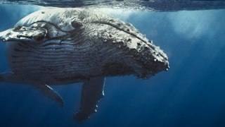 Migration des baleines en Colombie