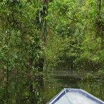 En Amazonie près de Puerto Nariño
