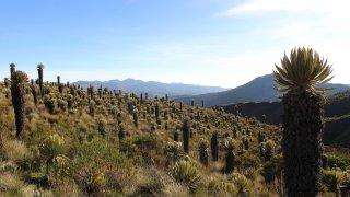 Le Paramo d'Oceta près de Mongui en Colombie
