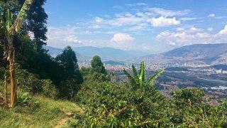 Finca de café autour de Medellin