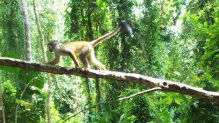 Les secrets de l'Amazonie